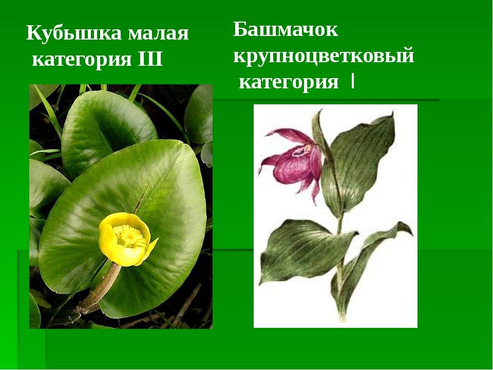 Кубышка малая категория III Башмачок крупноцветковый категория I