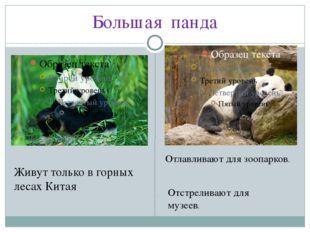 Большая панда Живут только в горных лесах Китая Отлавливают для зоопарков. От