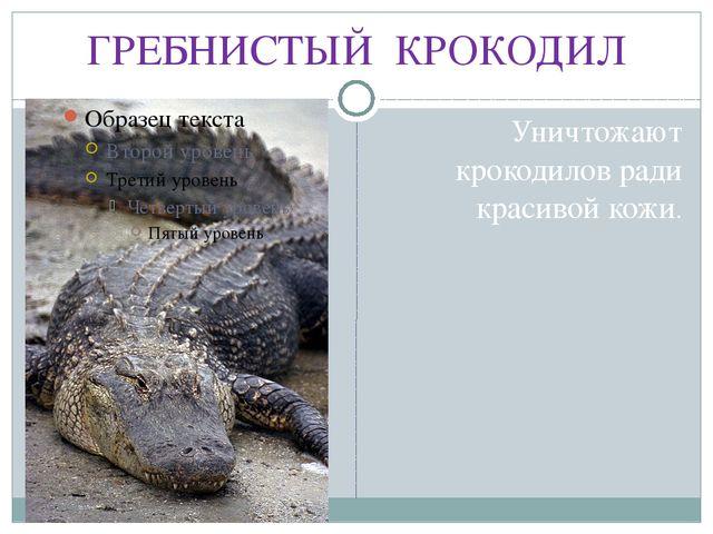 ГРЕБНИСТЫЙ КРОКОДИЛ Уничтожают крокодилов ради красивой кожи.