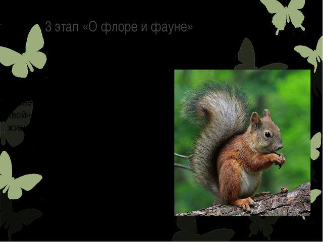 3 этап «О флоре и фауне» Белка является одним из типичных древесных обитателе...