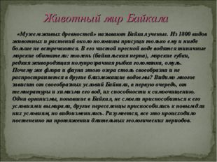 «Музеем живых древностей» называют Байкал ученые. Из 1800 видов животных и р