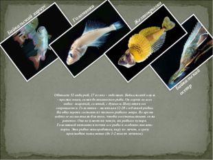 Обитает 52 вида рыб, 27 из них - эндемики. Байкальский омуль - промысловая, с