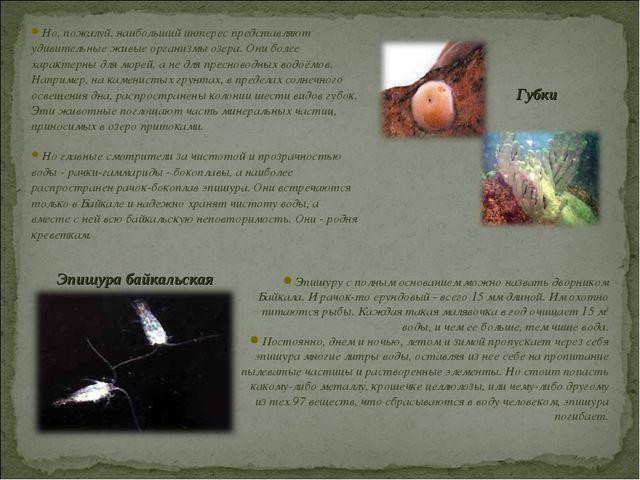 Но, пожалуй, наибольший интерес представляют удивительные живые организмы озе...