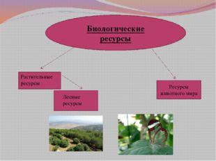 Биологические ресурсы Растительные ресурсы Лесные ресурсы Ресурсы животного