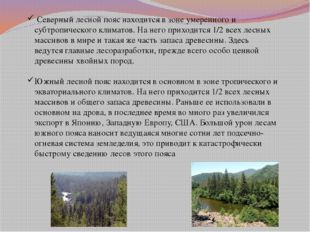 Северный лесной пояс находится в зоне умеренного и субтропического климатов.