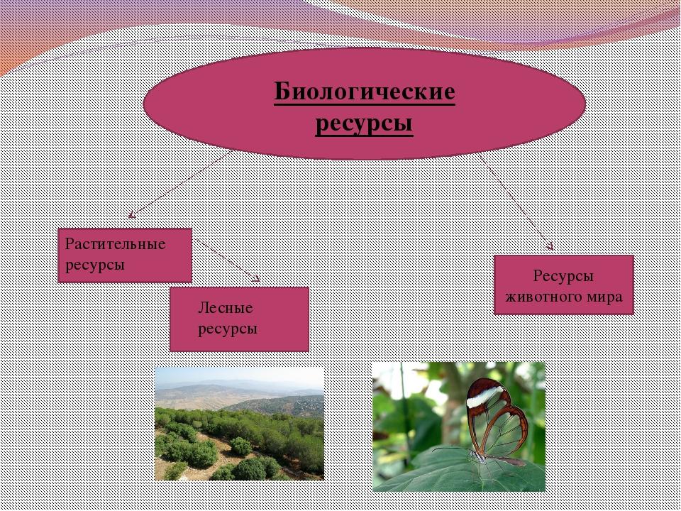 Биологические ресурсы Растительные ресурсы Лесные ресурсы Ресурсы животного...