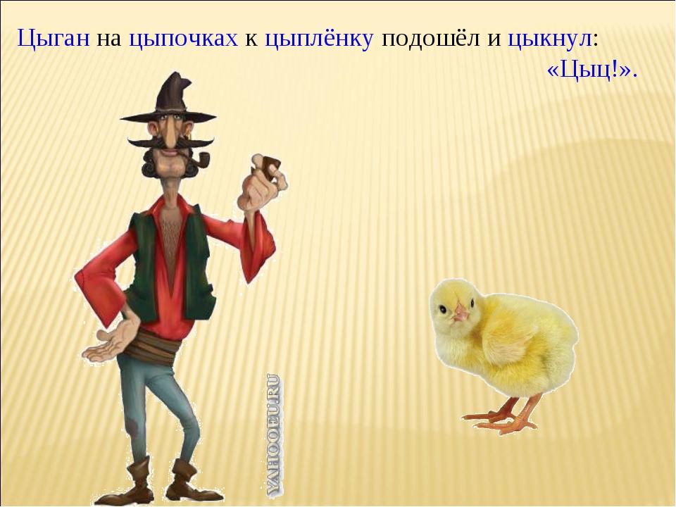 Цыган на цыпочках к цыплёнку подошёл и цыкнул: «Цыц!». Билявская Н.В.