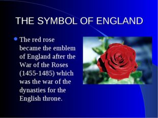 THE SYMBOL OF ENGLAND The red rose became the emblem of England after the War