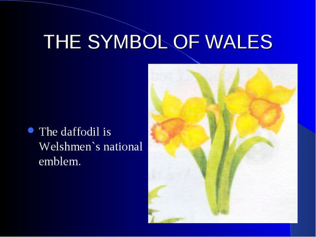 THE SYMBOL OF WALES The daffodil is Welshmen`s national emblem.