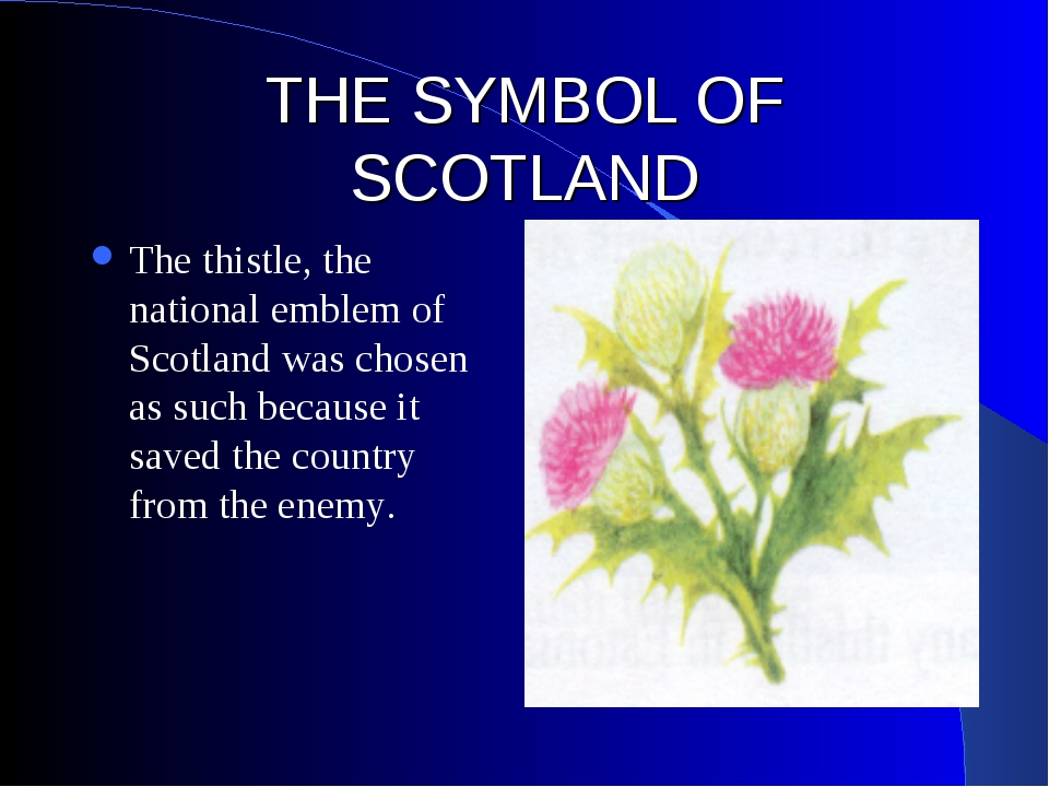 THE SYMBOL OF SCOTLAND The thistle, the national emblem of Scotland was chose...