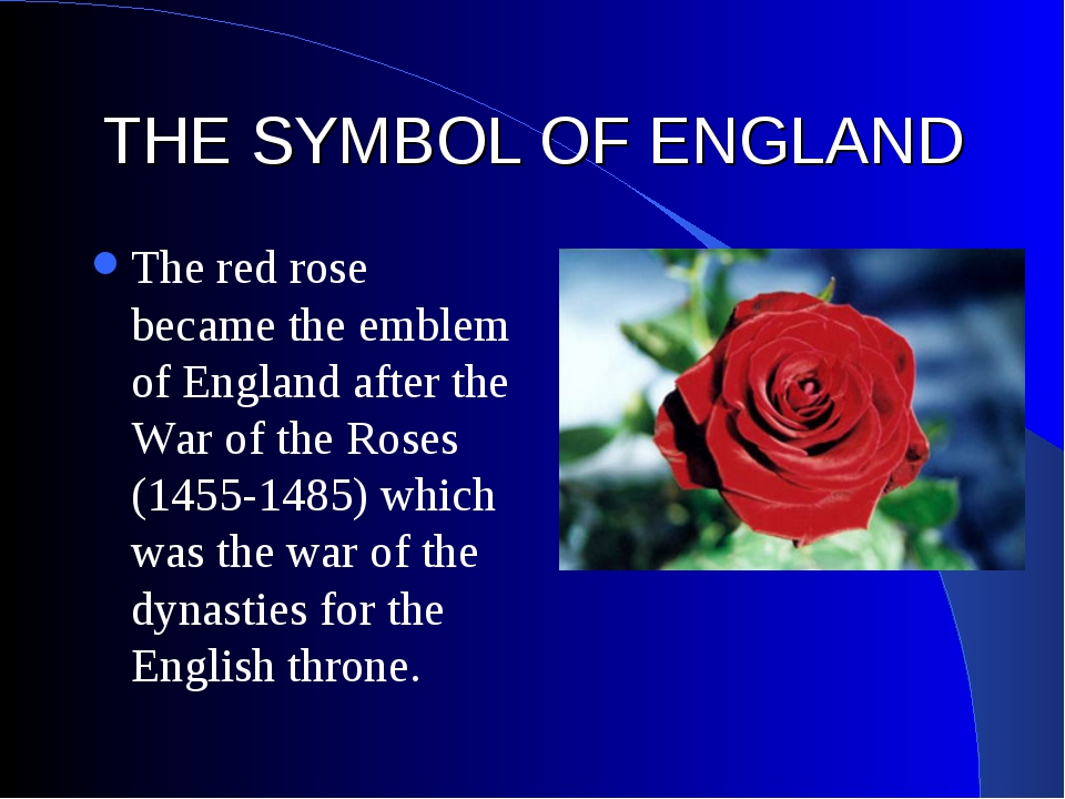 THE SYMBOL OF ENGLAND The red rose became the emblem of England after the War...