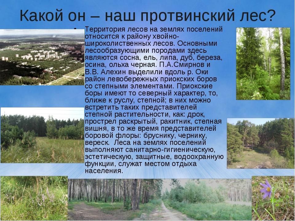 Какой он – наш протвинский лес? Территория лесов на землях поселений относитс...