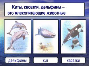 Киты, касатки, дельфины – это млекопитающие животные дельфины кит касатки