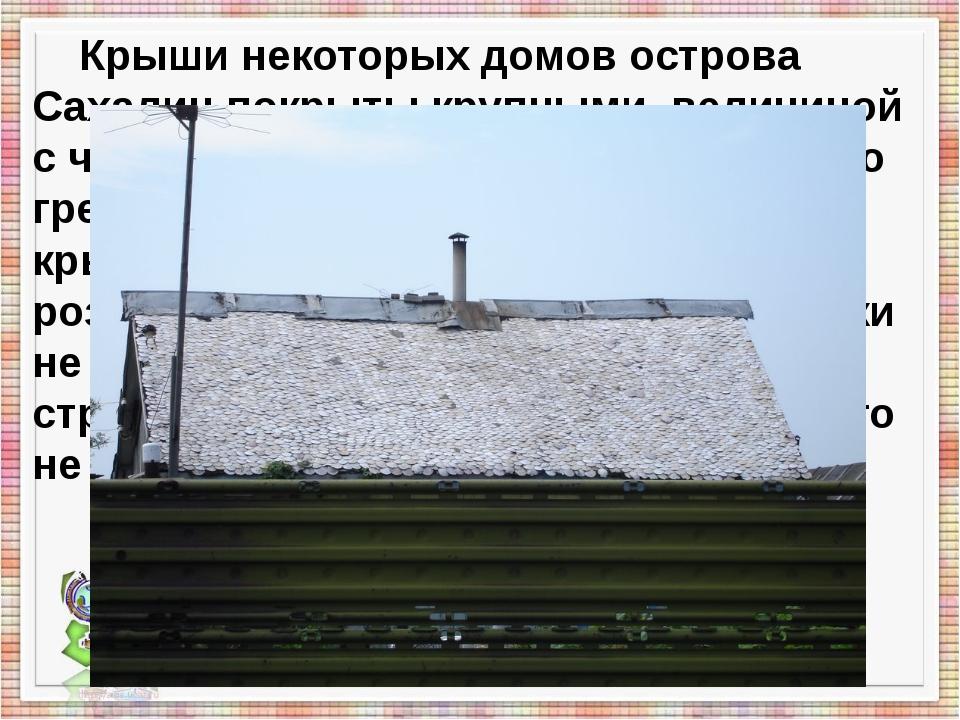 Крыши некоторых домов острова Сахалин покрыты крупными, величиной с чайное б...