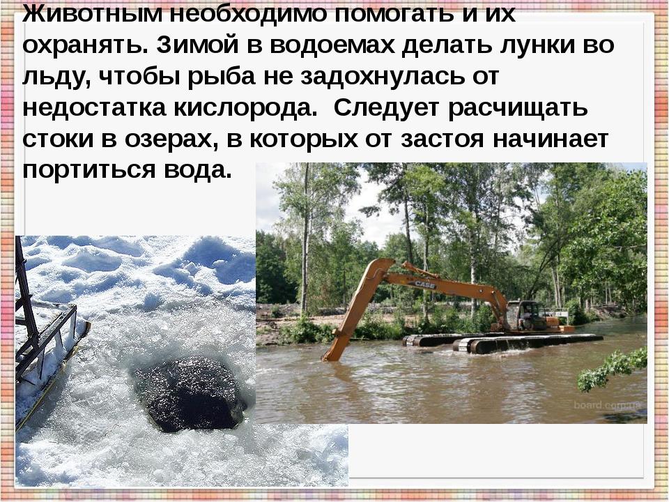 Животным необходимо помогать и их охранять. Зимой в водоемах делать лунки во...