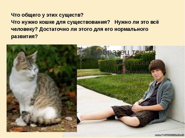 Что общего у этих существ? Что нужно кошке для существования? Нужно ли это в...