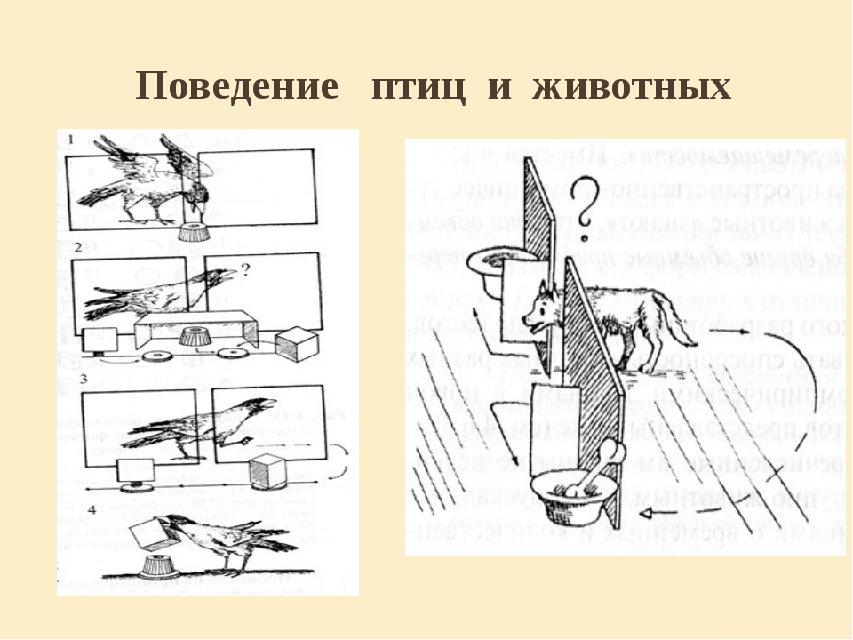 Поведение птиц и животных