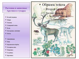 Растения и животные Арктики и тундры Белый медведь Морж Тюлень Северный олень