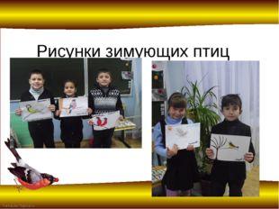 Рисунки зимующих птиц FokinaLida.75@mail.ru