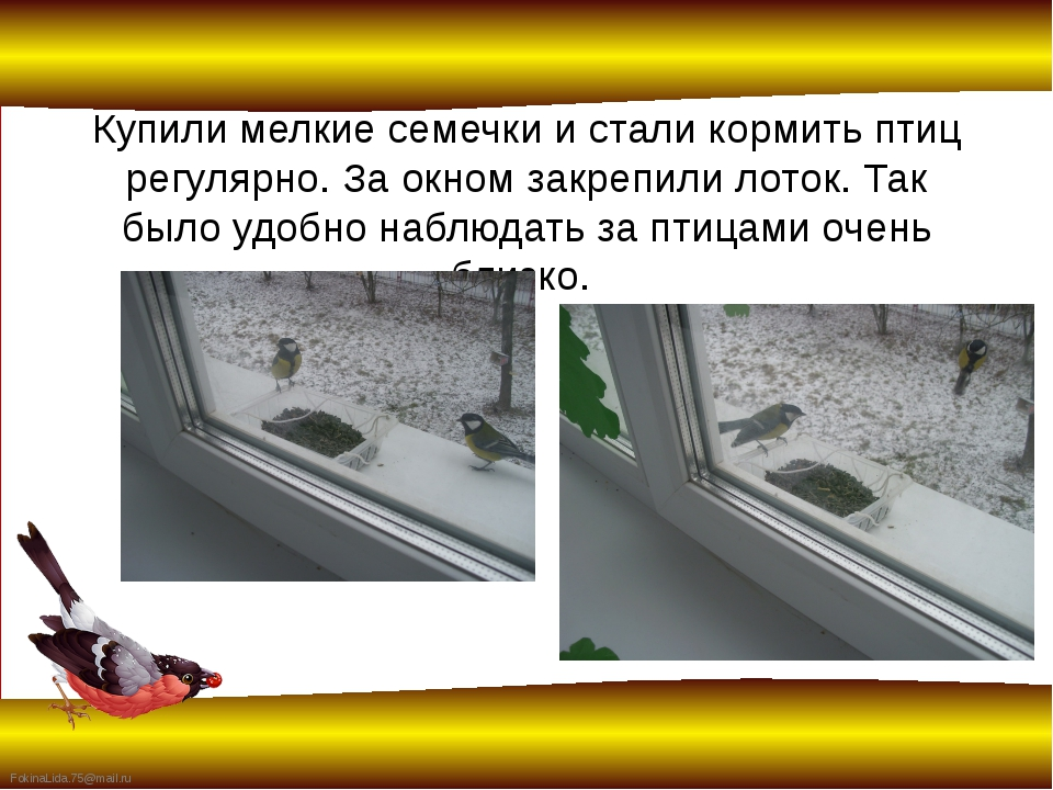Купили мелкие семечки и стали кормить птиц регулярно. За окном закрепили лото...