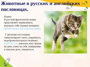 2004 2005 2006 2007 Животные в русских и английских пословицах. Кошка: В русс