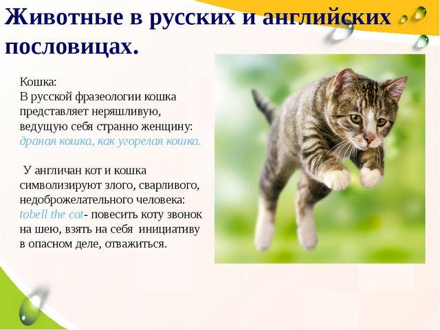 2004 2005 2006 2007 Животные в русских и английских пословицах. Кошка: В русс...
