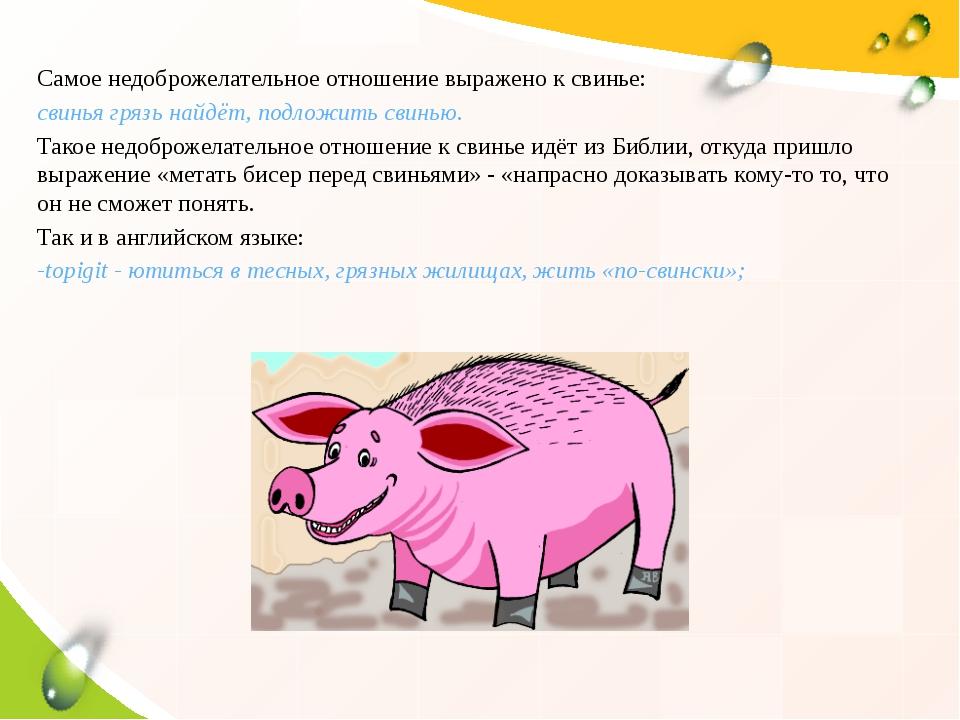 Самое недоброжелательное отношение выражено к свинье: свинья грязь найдёт, по...