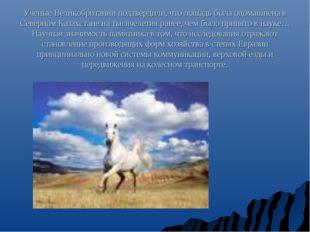 Ученые Великобритании подтвердили, что лошадь была одомашнена в Северном Каза