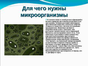 Для чего нужны микроорганизмы В соответствии со своей ролью и функцией в бала