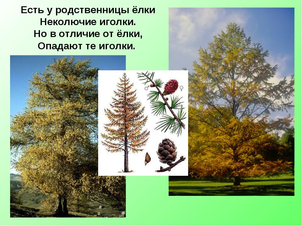 показано у елки опали иголки что делать наличии