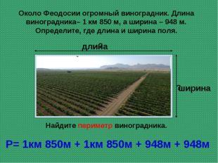 Около Феодосии огромный виноградник. Длина виноградника– 1 км 850 м, а ширина