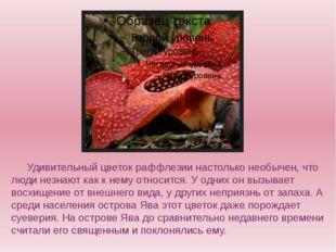 Удивительный цветок раффлезии настолько необычен, что люди незнают как к н