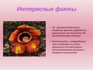 Интересные факты По оценкам ботаников, диаметр цветка раффлезии увеличился за