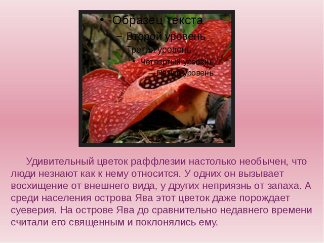 Удивительный цветок раффлезии настолько необычен, что люди незнают как к н...