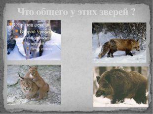 Что общего у этих зверей ?