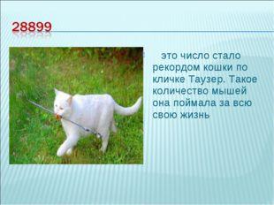это число стало рекордом кошки по кличке Таузер. Такое количество мышей она