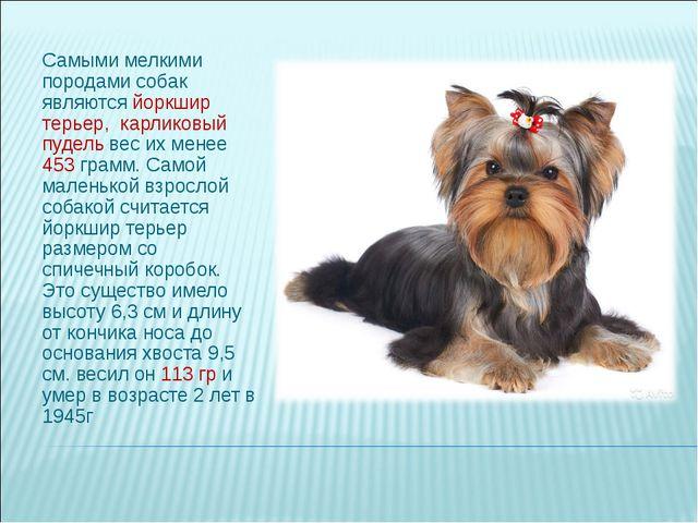 Самыми мелкими породами собак являются йоркшир терьер, карликовый пудель вес...