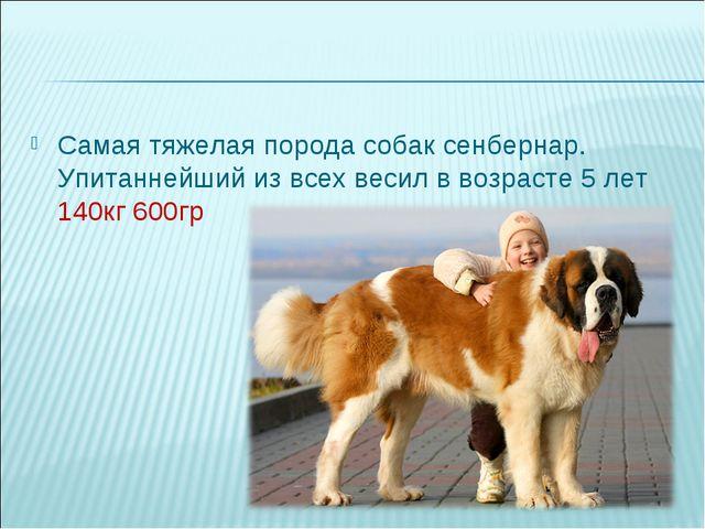 Самая тяжелая порода собак сенбернар. Упитаннейший из всех весил в возрасте 5...
