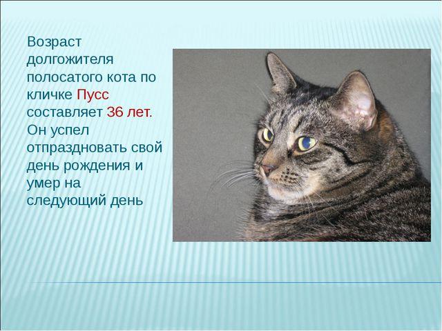 Возраст долгожителя полосатого кота по кличке Пусс составляет 36 лет. Он успе...