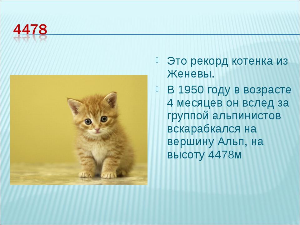 Это рекорд котенка из Женевы. В 1950 году в возрасте 4 месяцев он вслед за гр...
