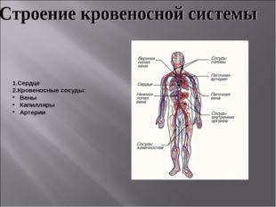 1.Сердце 2.Кровеносные сосуды: Вены Капилляры Артерии
