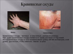 Вены Капилляры . Кровеносные сосуды прочные и эластичные, разные по размеру.