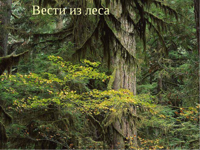 Вести из леса