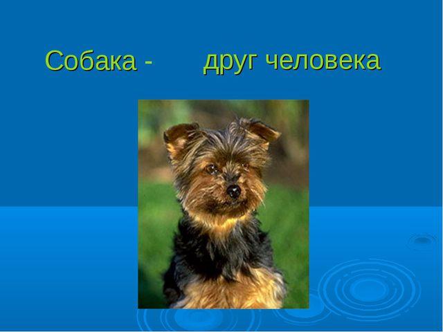 друг человека Собака -