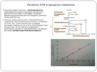 Ресинтез АТФ в процессе гликолиза Конечный продукт гликолиза, – молочная кисл