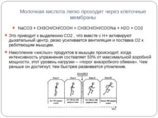 Молочная кислота легко проходит через клеточные мембраны NaCO3 + CH3CH/CH/COO