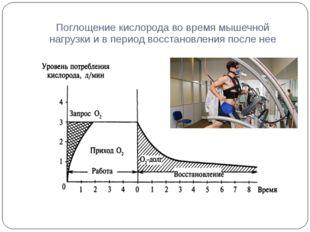 Поглощение кислорода во время мышечной нагрузки и в период восстановления пос