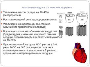 Адаптация сердца к физическим нагрузкам Увеличение массы сердца на 20-40% (ги