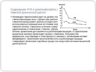 Содержание АТФ и креатинфосфата (Кф) в мышцах при тяжелой физической работе А