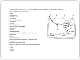 Стероидные гормоны, используемые для оценки функционального состояния спортсм